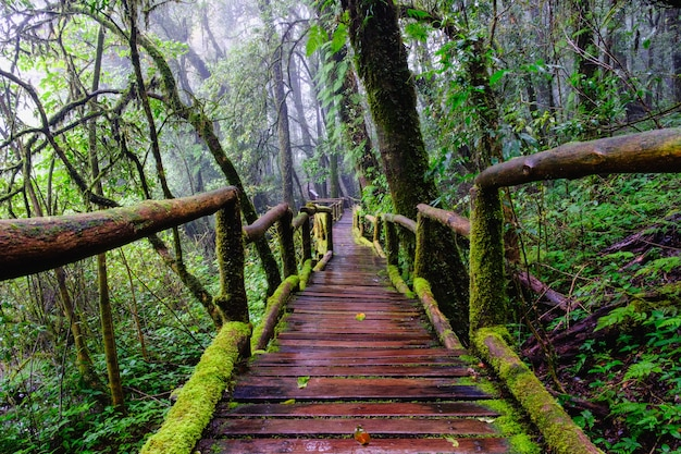 Trail bridge walking way at nation park in mountain evergreen forest