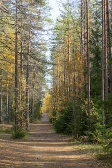나무에 노란 잎과 안개 낀 추운 아침이 있는 가을 숲속의 시골길