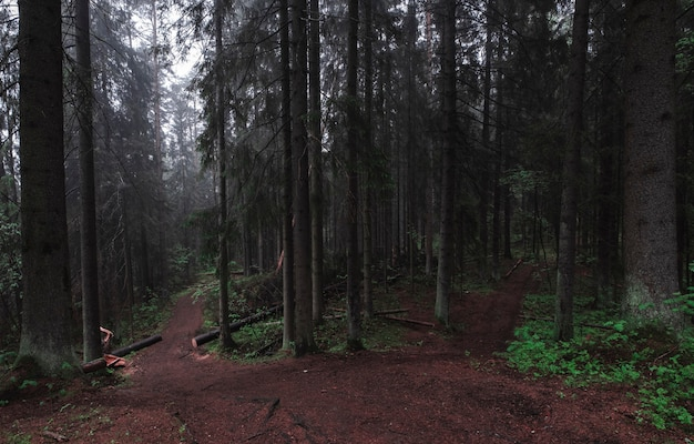 Trail into the dark misty and mystical forest forest. moody scenery