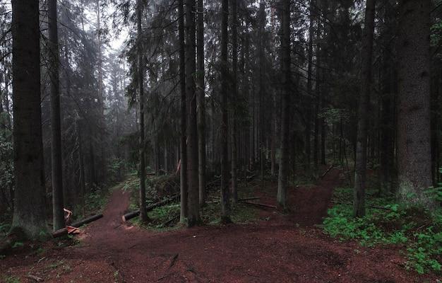 Следуйте в темный туманный и мистический лесной лес. муди пейзаж