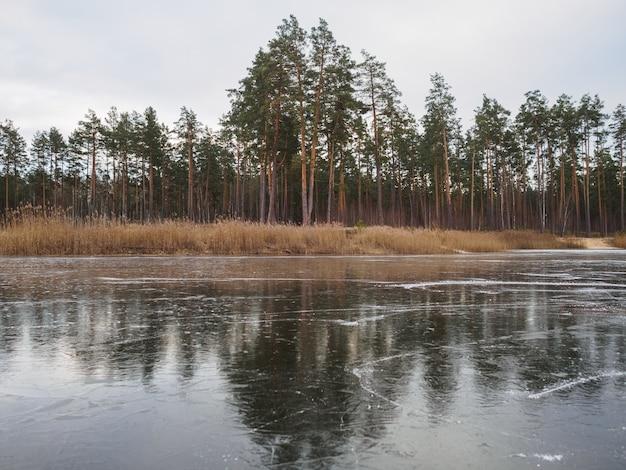 석양 겨울에 얼어 붙은 숲의 호수에 스케이트의 흔적