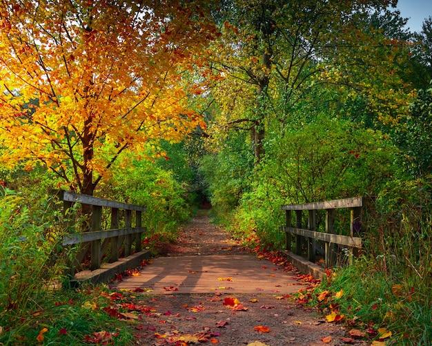 アップステート ニューヨークの美しい秋の森を歩く