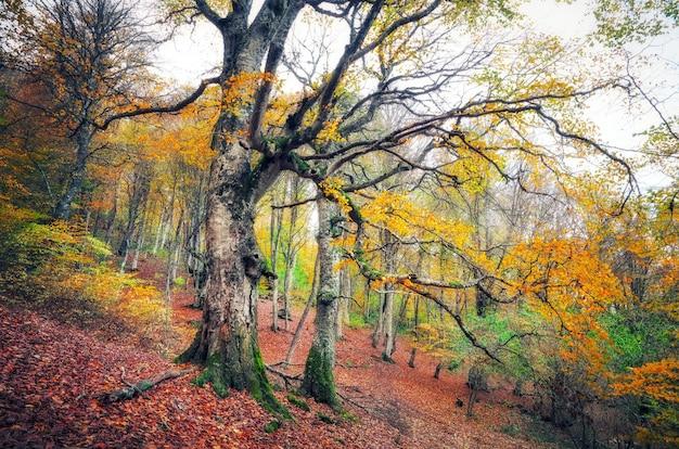 霧の中で神秘的な暗い古い森をたどります。クリミアの秋の朝。魔法のような雰囲気