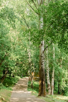 Trail through the spring forest. walkway lane path with green trees in forest. beautiful alley, road in park. way through summer forest. vertical frame