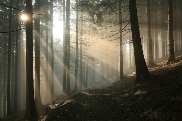 Пройдите через лес к вершине горы солнечным осенним утром.