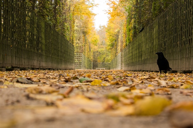 Trail with yellow autumn leaves