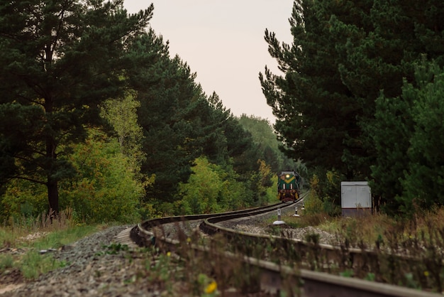 Train goes by rails to turn in dense thickets.