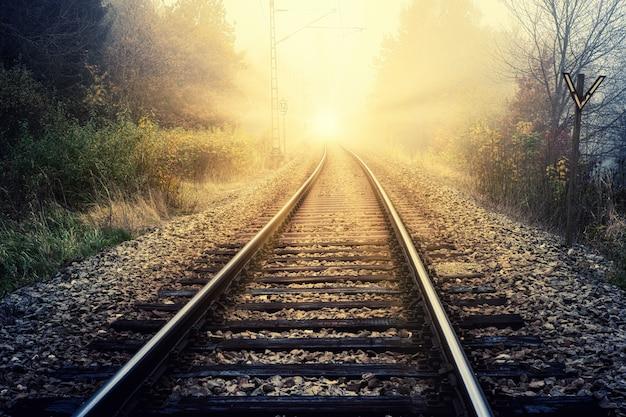 낮에는 푸른 나무 사이의 기차 레일