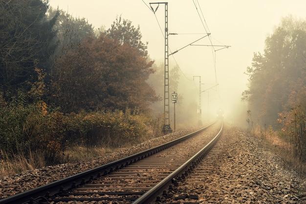 Treno ferroviario tra alberi verdi durante il giorno