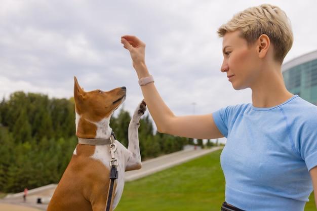 Дрессированная умная собака, берущая пищу у человека