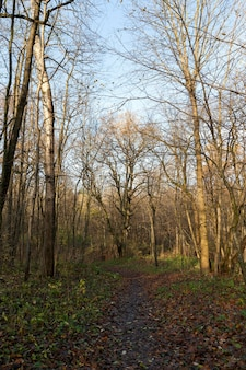 Вытоптанная в лесу прогулочная дорожка в осенний сезон листва упала на землю