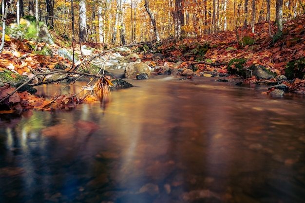 秋の枝が落ちた森の中の静かな池