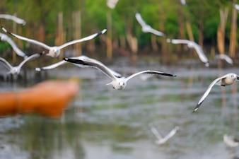 自然で飛ぶカモメと静かな場面