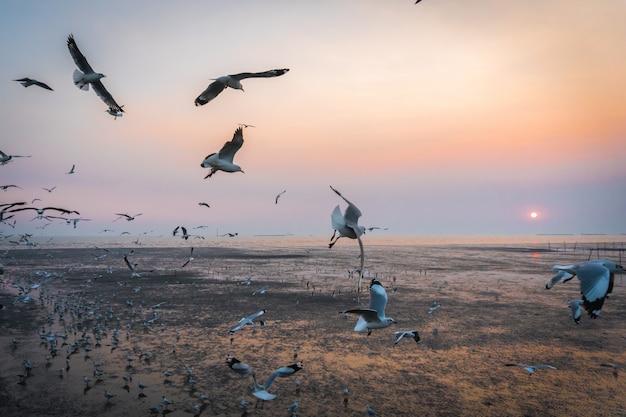 Tranquil scene with seagull flying at sunset at bangpoo samut prakan, thailand