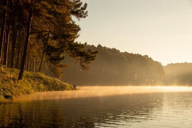 Tranquil scenery of lakeside forest in the morning
