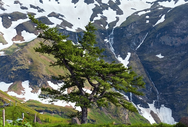 Tranquil summer alps mountain view with lonely pine tree