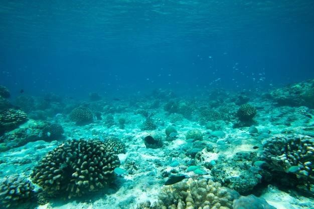 Спокойная подводная сцена с копией пространства
