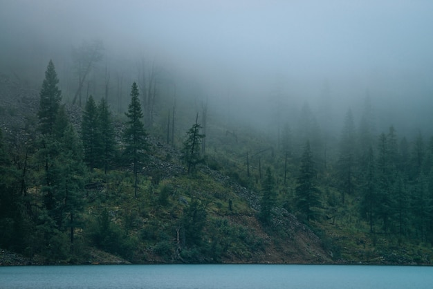 Tranquil view to alpine dark forest in dense fog near steep shore of mountain lake. atmospheric foggy landscape with low clouds and calm water. coniferous trees on steep slope. hipster, vintage tones.