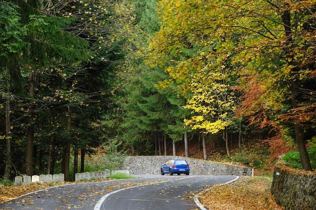 Transfagarasan道路で森の中の車