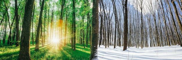 Transitional season in the forest from winter to summer spring