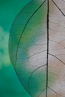 Transparent abstract leaf with green and white