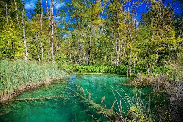 Прозрачное озеро в национальном парке плитвицкие озера, хорватия