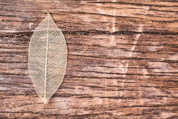 Transparent leaf on wooden background