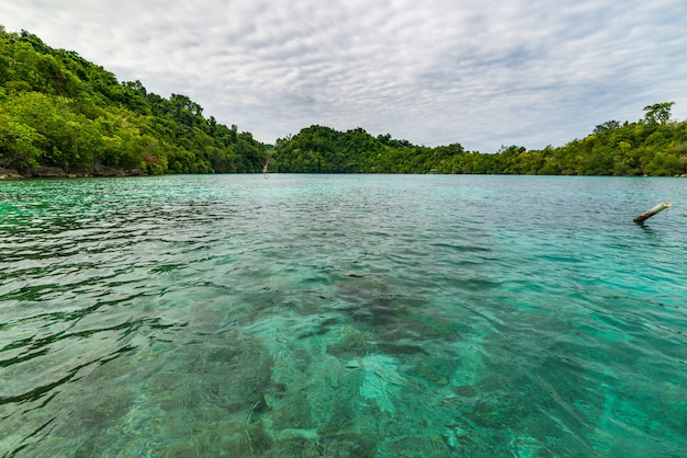 Transparent sea, green forest in the remote malenge beach, togean islands, sulawesi, indonesia.