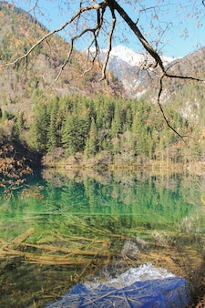 Прозрачное бирюзовое озеро с деревьями, затопленными в национальном парке цзючжайгоу, и снежная гора