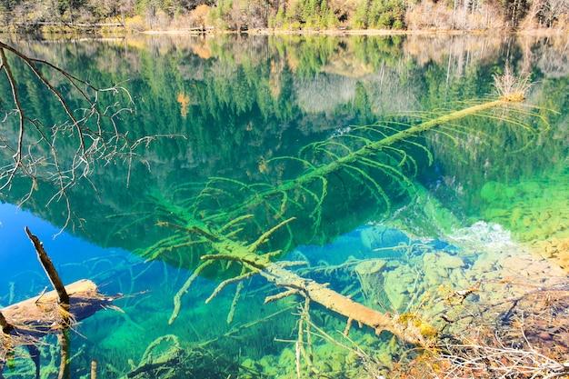 Прозрачное бирюзовое озеро с деревьями, затопленными в национальном парке цзючжайгоу в провинции сычуань.