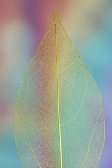 Transparent vivid colored autumn leaf