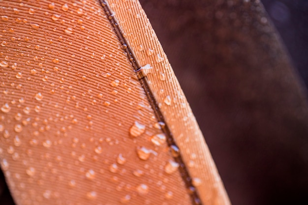 Transparent water drops on brown feather surface