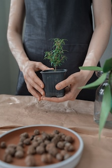 Transplant flowers and plants at home or in a flower shop a woman gardener or florist plant care