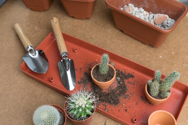 Пересадка кактусов маленькие кактусы в горшках и небольшие садовые инструменты концепция садоводства для хобби