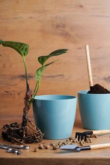 흙과 도구가 있는 나무 테이블에 뿌리가 있는 꽃을 새 화분에 이식합니다.