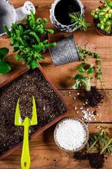 観葉植物を鉢に移植する、上面図。 webサイトのジューシーケアコンセプトバナー。高品質の写真