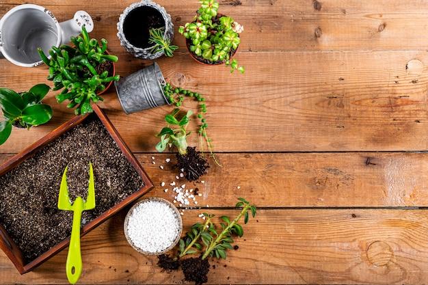 観葉植物を鉢に移植する、上面図。テキストのための木製の背景の空きスペースのジューシーなケアの概念。高品質の写真