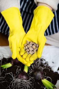 배수가 팽창 된 점토가있는 노란색 장갑에 여성의 손을 이식하고 정원 도구로 히아신스 전구를 심습니다.