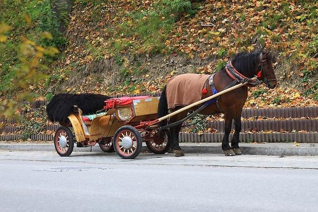 Trasporto animale cavallo autunno cadono trasporto