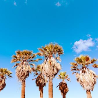 여행 개념입니다. 해변 분위기. 손바닥. 카나리아 섬