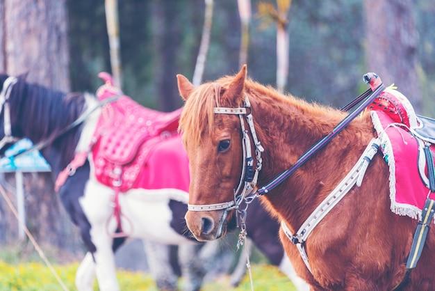 Travel horse
