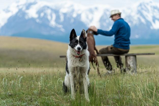 Путешествие в горы алтая с собаками. черно-белая собака сидит рядом с парнем на фоне горных вершин