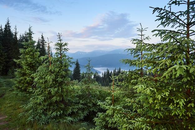 旅行、トレッキング。夏の風景-山、緑の草、木、青い空。