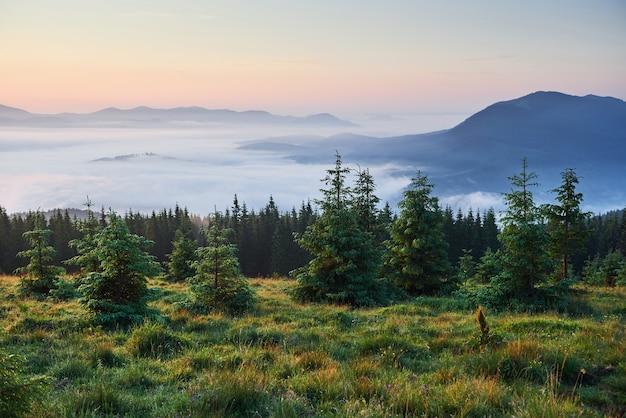 여행, 트레킹. 여름 풍경-산, 푸른 잔디, 나무와 푸른 하늘.