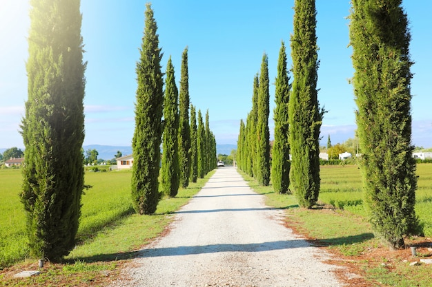 Travel in tuscany. beautiful and idyllic landscape of a lane of cypresses in the tuscan countryside in italy.