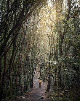 노란색 재킷과 배낭을 입은 여행자가 신비한 마법의 숲을 걷고 있습니다.