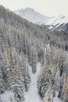 スイス、ヴェルビエの山をスキーで滑る旅行者