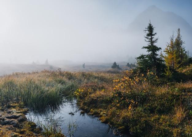 Traveler walking in autumn wilderness with swamp in mist