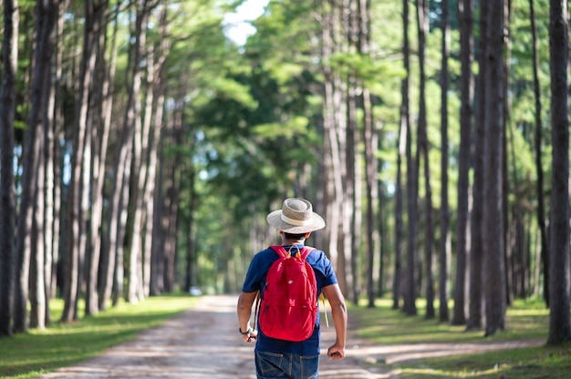 A traveler walking in pine forest at suan son bor keaw, chiang mai, thailand