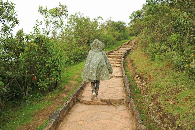 Traveler walking on stone path in rain heading to kuelap archaeological site, northern peru